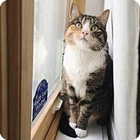 Adopt A Pet :: Puddles - New York, NY