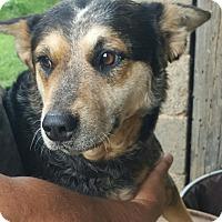Adopt A Pet :: Daisy - Sussex, NJ
