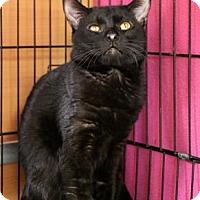 Adopt A Pet :: Bernie - Gloucester, MA