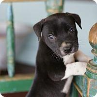 Adopt A Pet :: Vinnie - San Antonio, TX