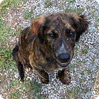 Adopt A Pet :: Lisa - Baileyton, AL