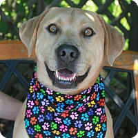 Adopt A Pet :: Timothy - Garfield Heights, OH