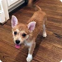 Adopt A Pet :: Mack - Atlanta, GA