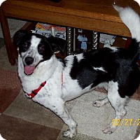 Adopt A Pet :: Tasha - Lafayette, LA