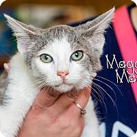 Adopt A Pet :: Maggie Mae - Somerset, PA