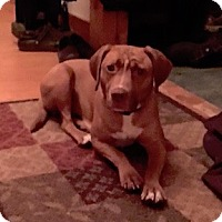 Adopt A Pet :: Hope - East Randolph, VT