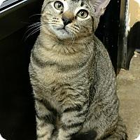 Adopt A Pet :: Alphonse - Madisonville, LA
