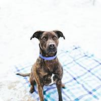 Adopt A Pet :: Athena - Stanton, MI