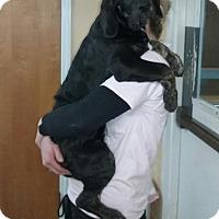 Adopt A Pet :: Grant - Irmo, SC