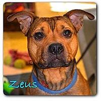 Adopt A Pet :: Zeus - Maryville, IL