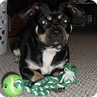 Adopt A Pet :: Gabbie - Hamilton, ON