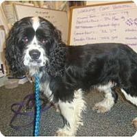 Adopt A Pet :: Jude - Tacoma, WA