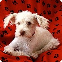 Adopt A Pet :: MIssy - san diego, CA