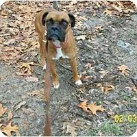 Adopt A Pet :: Bria - Richmond, VA