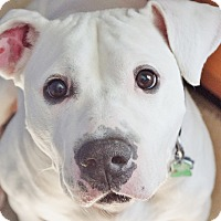 Adopt A Pet :: Mr. Boh - Reisterstown, MD