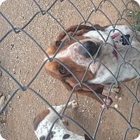 Adopt A Pet :: Lil Charlie - Acton, CA