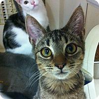 Adopt A Pet :: Ferris - Riverside, CA