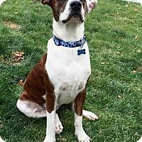 Adopt A Pet :: Quigley - West Hartford, CT