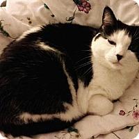 Adopt A Pet :: MuuMuu - Washburn, WI