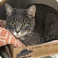 Adopt A Pet :: Taz - East Brunswick, NJ