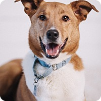 Adopt A Pet :: Dexter - Portland, OR