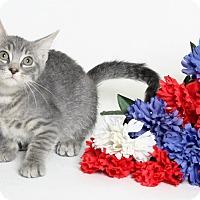 Adopt A Pet :: Acute - Covington, LA
