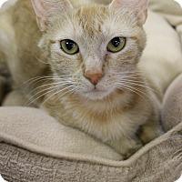 Adopt A Pet :: Bobbi Jo - Medina, OH