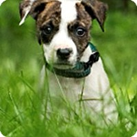 Adopt A Pet :: Queen Elizabeth - Bloomington, IL