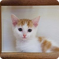 Adopt A Pet :: Devonne - Marietta, GA