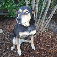 Adopt A Pet :: osa - haslet, TX