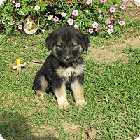 Adopt A Pet :: TATUM - Bedminster, NJ