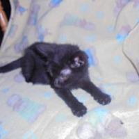 Adopt A Pet :: kolby - Trexlertown, PA