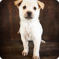 Adopt A Pet :: Camry - Fredericksburg, TX