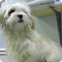 Adopt A Pet :: TODD - Atlanta, GA