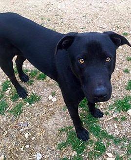 Labrador Retriever Mix Dog for adoption in Clifton, Texas - McGee