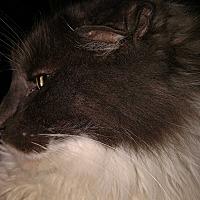Adopt A Pet :: Cooper - Covington, PA