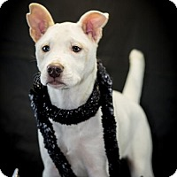 Adopt A Pet :: Ava Gardner - New City, NY