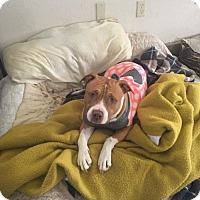 Adopt A Pet :: Betsy - Custer, WA