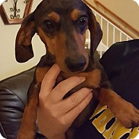 Adopt A Pet :: Benny the Jet - San Antonio, TX