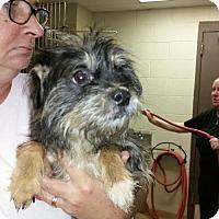 Adopt A Pet :: Sonny - Lindale, TX