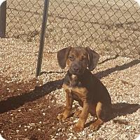 Adopt A Pet :: Alice: Adoption Pending - Verona, NJ