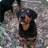 Adopt A Pet :: Sheba (Courtesy Listing) - Richmond, VA