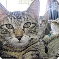 Adopt A Pet :: Daphne - Warren, OH