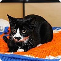 Adopt A Pet :: MIkkie - Farmingdale, NY