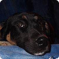 Adopt A Pet :: Skittles - Pawling, NY