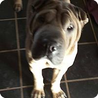 Adopt A Pet :: Stella - adoption pending - Mira Loma, CA