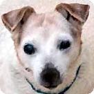 Adopt A Pet :: Miss Daisy