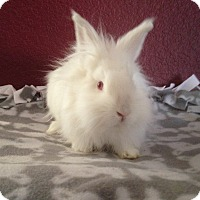Adopt A Pet :: Pierston - Watauga, TX