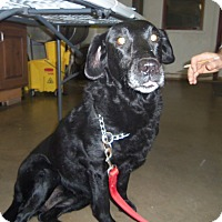 Adopt A Pet :: ROSE - Medford, WI