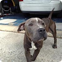 Adopt A Pet :: Henrietta - White Settlement, TX
